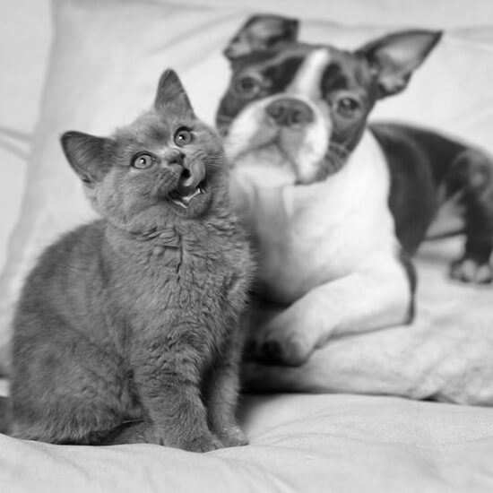 CEWE 2018. Brill kutyus és a cicák